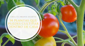 tomates huerto